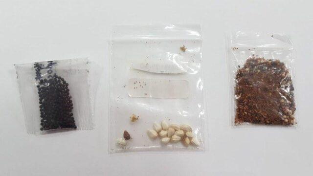 Governo identifica plantas daninhas, fungos e bactérias em sementes clandestinas